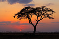 Sunset with silhouetted tree - PhotoDune Item for Sale