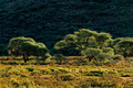 African landscape - PhotoDune Item for Sale