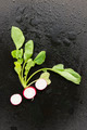 radish on black background - PhotoDune Item for Sale