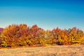 colored autumn mountains