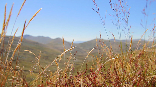 VideoHive Wind Blowing Through Grass On a Mountain 11101149