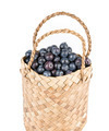 Wicker basket with Blueberries Isolate on white - PhotoDune Item for Sale