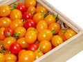 Small Red and Yellow tomatos. - PhotoDune Item for Sale