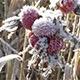 Bush in Hoar Frost - VideoHive Item for Sale