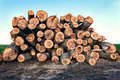 Big pile of logs lying in a field - PhotoDune Item for Sale