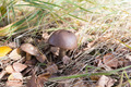Mushroom among grass and leaves - PhotoDune Item for Sale