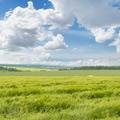 wheat field and cloudy sky - PhotoDune Item for Sale