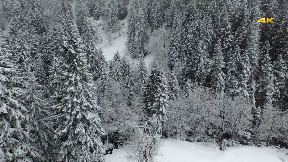 VideoHive Aerial Flying Over the Winter Forest Snowfall 11109628