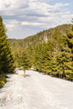 Green spruce forest beginning of spring - PhotoDune Item for Sale