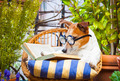 dog reading a book - PhotoDune Item for Sale