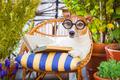 dog reading - PhotoDune Item for Sale
