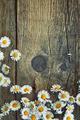 Spring background - PhotoDune Item for Sale