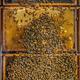 Bee colony - PhotoDune Item for Sale