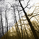 Trees (2 versions) - VideoHive Item for Sale