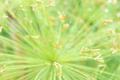 Egyptian papyrus sedge plant. - PhotoDune Item for Sale