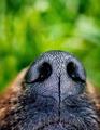 Dog snout - PhotoDune Item for Sale