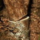 Tree sawn in a forest - PhotoDune Item for Sale