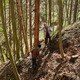 Senior lumberjacks cutting trees - PhotoDune Item for Sale