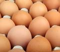 eggs - PhotoDune Item for Sale