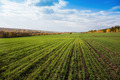 Agricultural field in Europe - PhotoDune Item for Sale
