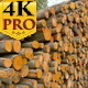 Tall Heaps of the Grey Alder Logs Ready for Transp - VideoHive Item for Sale