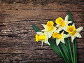 Flowers yellow daffodils on a wooden vintage background  - PhotoDune Item for Sale