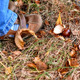 Little Child Picking Up Chestnuts in Park - VideoHive Item for Sale