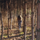 Woman in the Forest - VideoHive Item for Sale
