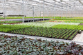 Greenhouse with cultivation of several plants and flowers - PhotoDune Item for Sale
