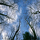 Looking Up At The Sky Through Tree Branches - VideoHive Item for Sale