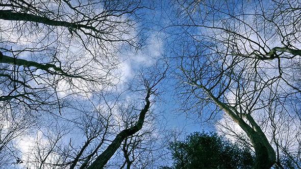 Looking Up At The Sky Through Tree Branches