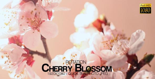 Beautiful Cherry Blossom 2