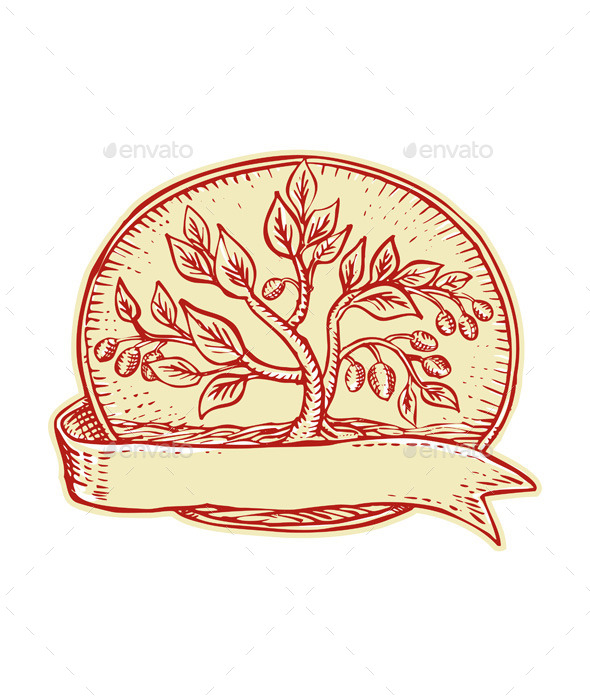 GraphicRiver Olive Tree Ribbon Oval Etching 11148577
