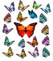 Set of different colorful butterflies - PhotoDune Item for Sale