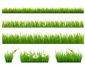 Big collection of green grass.  - PhotoDune Item for Sale
