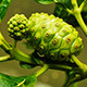 Noni Fruit - VideoHive Item for Sale