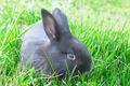 little rabbit on green grass background - PhotoDune Item for Sale