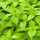 plenty of wet green leaves - PhotoDune Item for Sale