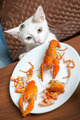 White cat steals crayfish from dish - PhotoDune Item for Sale