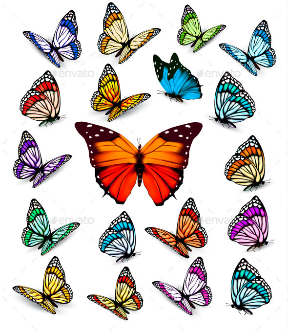 GraphicRiver Butterflies 11162053