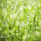 Wet green grass in dew drops - PhotoDune Item for Sale