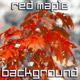 Red Maple - VideoHive Item for Sale