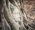 Buddha head in Wat Mahatat - PhotoDune Item for Sale