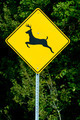 Deer Road Warning Sign