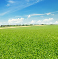 picturesque green field and blue sky - PhotoDune Item for Sale