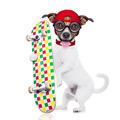 skater  boy dog - PhotoDune Item for Sale