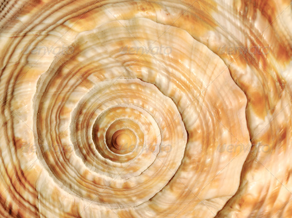Spiral on sea shell - Stock Photo - Images