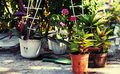 care of ornamental flowers in pots in the spring  - PhotoDune Item for Sale