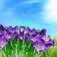 crocus flower - PhotoDune Item for Sale