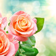 rose flower - PhotoDune Item for Sale